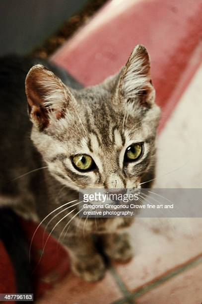 portrait of a young cat - gregoria gregoriou crowe fine art and creative photography ストックフォトと画像