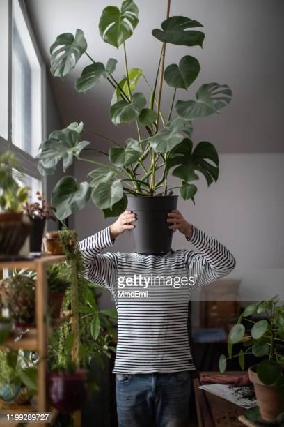 verticale d'un jeune jardinier d'intérieur retenant l'usine de fromage - jardinier humour photos et images de collection