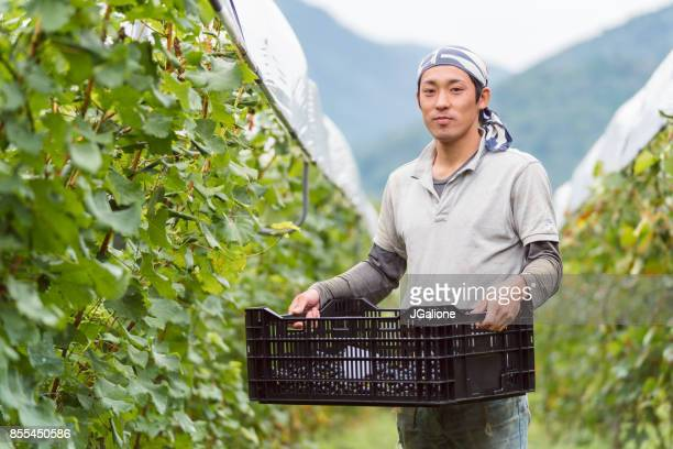 portrait of a young japanese grape farmer in his vineyard - farm worker stock pictures, royalty-free photos & images