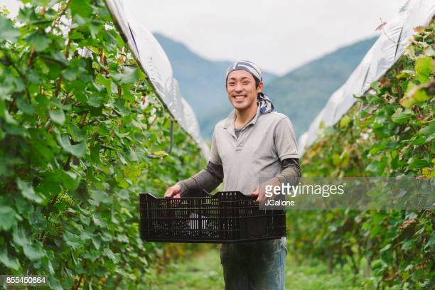 portrait of a young japanese grape farmer in his vineyard - japanese culture stock pictures, royalty-free photos & images