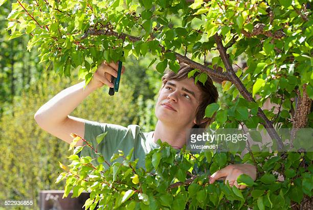 Portrait of a young man trimming apricot tree