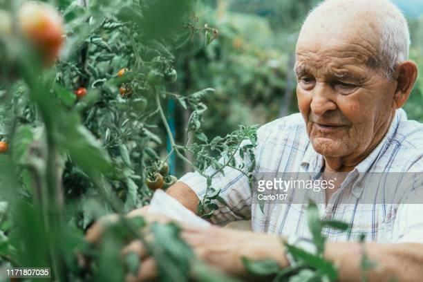 portret van actieve senior man tuinieren - onafhankelijkheid stockfoto's en -beelden