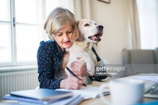 A portrait of active senior woman with a dog working in home office.