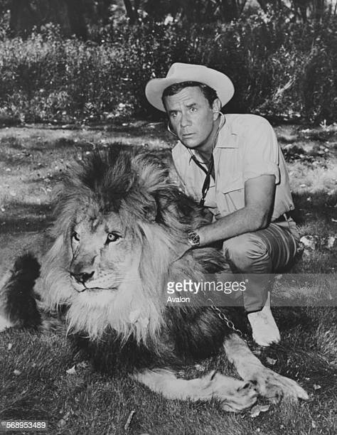 Portrait of actor Marshall Thompson and his costart the famous lion Clarence on the set of the television show 'Daktari' January 16th 1968