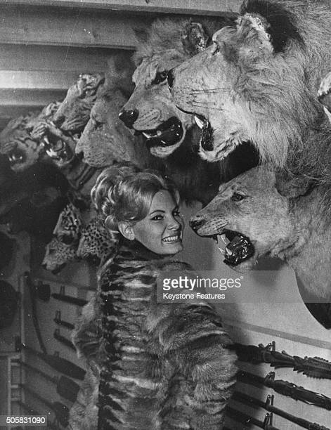 Portrait of actress Molly Peters posing in front of a row of mounted stuffed lions heads at a taxidermist's circa 1965
