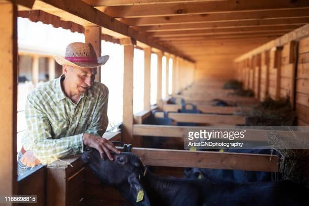 retrato do fazendeiro masculino adulto no rancho. - oxen - fotografias e filmes do acervo