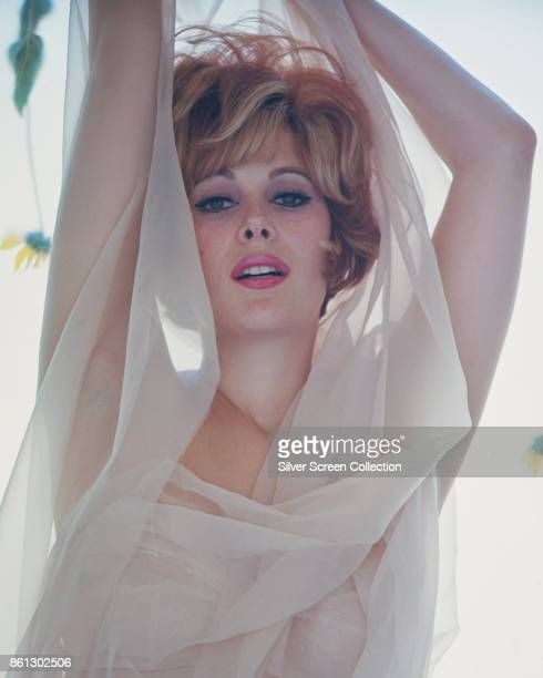 Portrait of American actress Jill St John wrapped in a sheer which scarf as she poses with her arms above her head 1960s