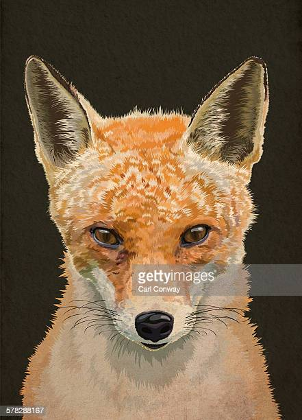 Portrait of an English adult fox