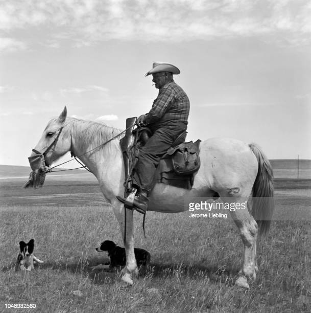 Portrait of an unidentified cowboy as he sits atop a horse in a prairie on the Blackfeet Indian Reservation Browning Montana 1962 Two herding dogs...