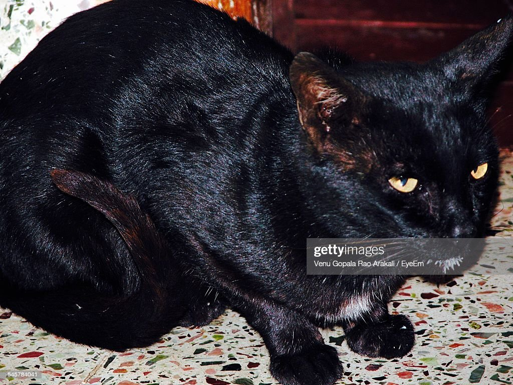 Portrait Of Angry Black Cat Sitting On Floor Stock Photo