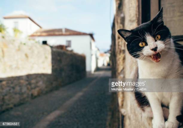 Portrait Of Angry Cat On Retaining Wall