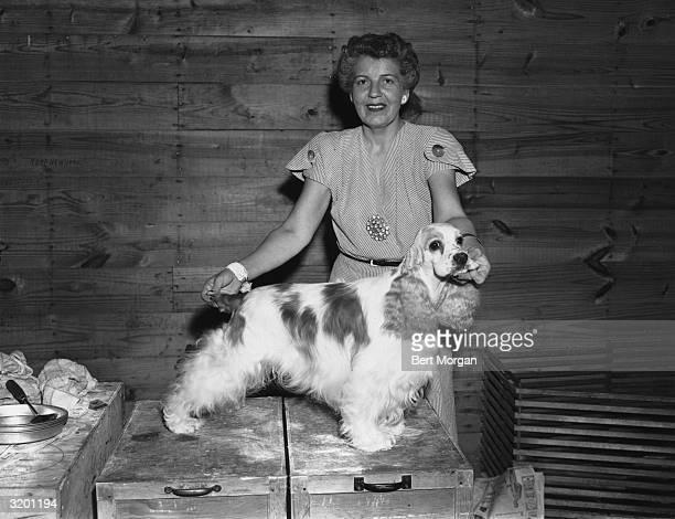 Portrait of Beatrice W Wegusen of Michigan grooming her American cocker spaniel 'Ch Honey Creek Harmonizer' on top of some crates indoors