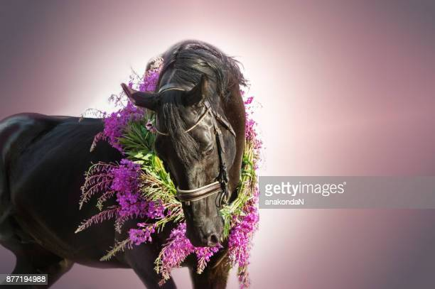 portrait of beautiful black horse with flower wreath at lilac gradient background.