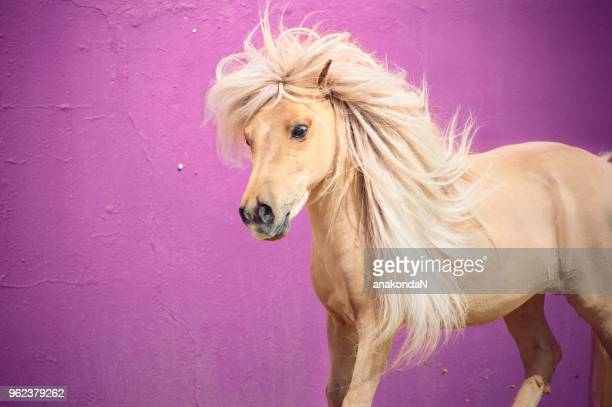 portrait of beautiful chestnut pony with long mane in motion. Andalisia, Spain