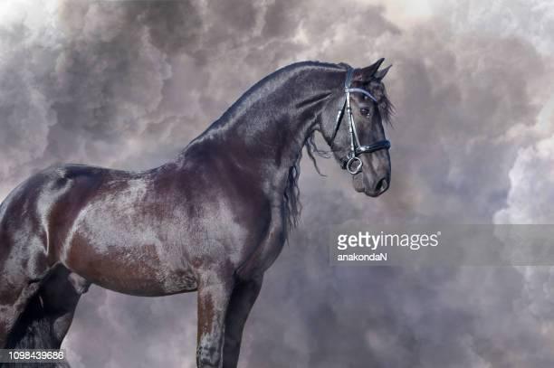Portrait of beautiful Frisian horse posing against clouds