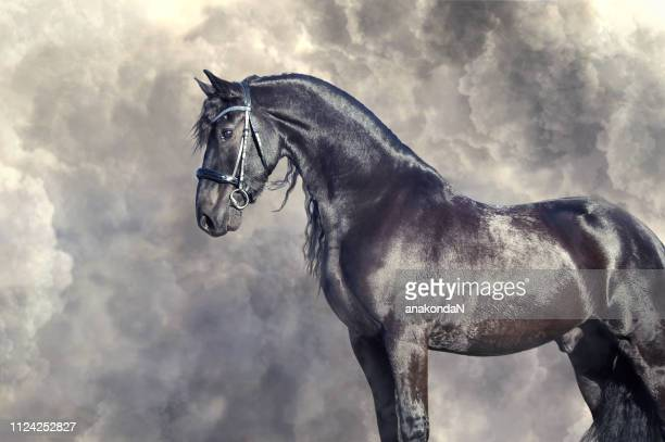 portrait of beautiful frisian horse posing against dramatic clouds - dressage horse russia stock photos and pictures