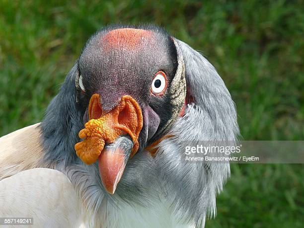 portrait of bizarre exotic bird - ugly bird stock pictures, royalty-free photos & images