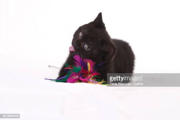 Portrait Of Black Cat And Toy Against White Background
