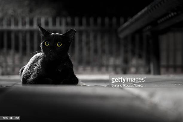portrait of black cat at night - gatto nero foto e immagini stock