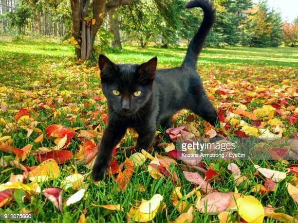 portrait of black cat on autumn tree - gatto nero foto e immagini stock