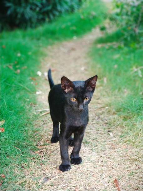 Portrait Of Black Cat On Field