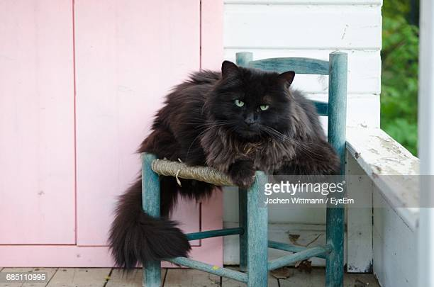 Portrait Of Black Cat Resting On Stool In Balcony