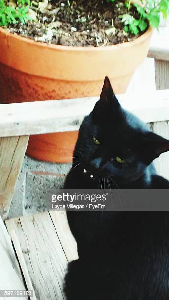 portrait of black cat sitting against potted plant - eye black stock photos and pictures