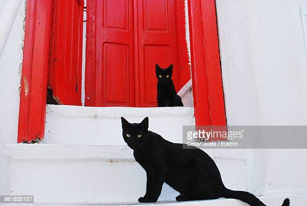 portrait of black cats on steps against closed door - gatto nero foto e immagini stock