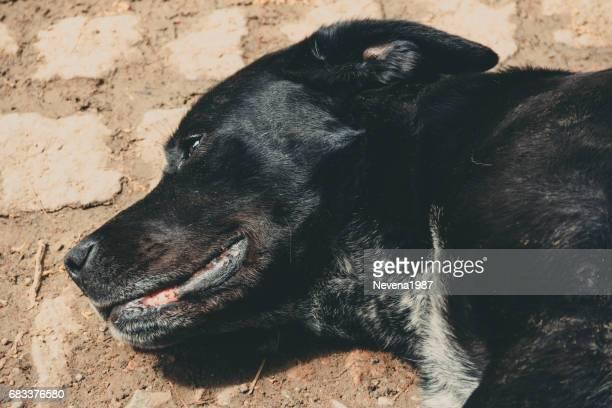 犬のポートレート、黒