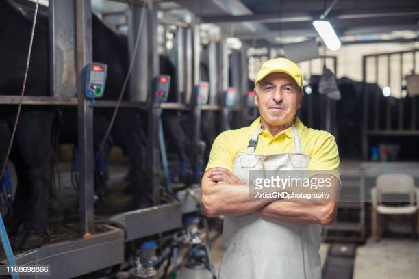 portrait of blue collar worker in modern dairy farm. - milking stock pictures, royalty-free photos & images