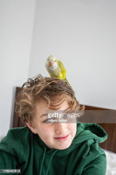 portrait of boy and his parrot - angela auclair stock pictures, royalty-free photos & images