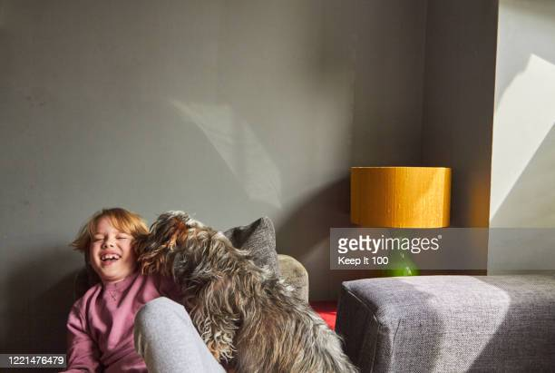 portrait of boy at home with his dog - messing about stock pictures, royalty-free photos & images