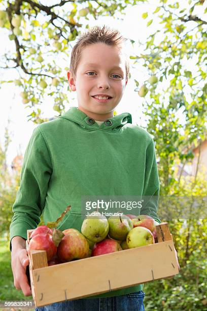 Portrait of boy carrying crate of apples in orchard