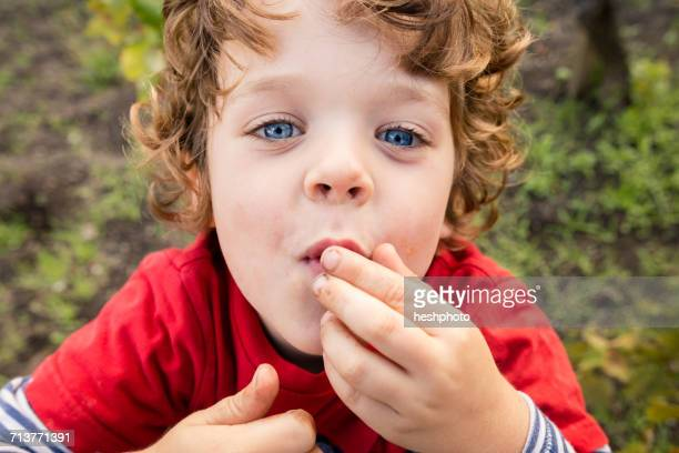 portrait of boy eating grapes in vineyard - heshphoto stock pictures, royalty-free photos & images