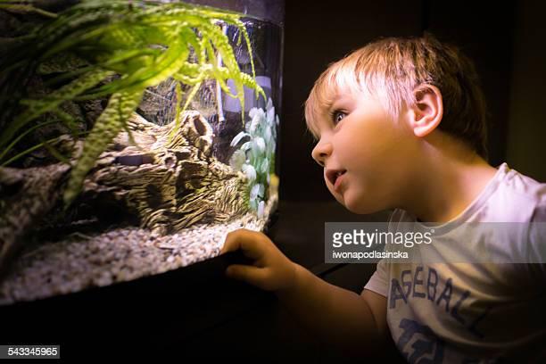 Portrait of boy looking through aquarium glass