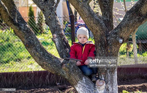 portrait of boy sitting on tree - igor golovniov stock pictures, royalty-free photos & images