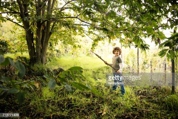 portrait of boy with pole to collect chestnuts in vineyard woods - heshphoto stockfoto's en -beelden