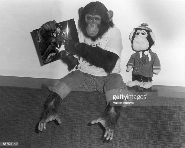 Portrait of Bubbles a chimpanzee owned by popular entertainer Michael Jackson dressed in jeans and a tshirt holds up a photo of himself and the...