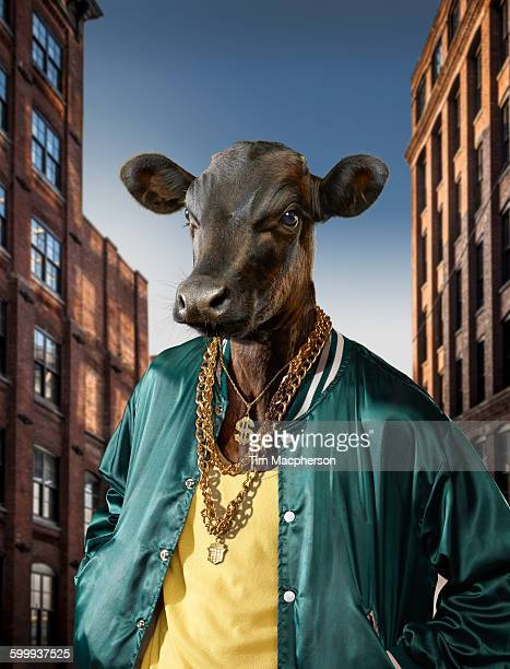 portrait of bull dressed as hip hop king - gold chain necklace stock pictures, royalty-free photos & images