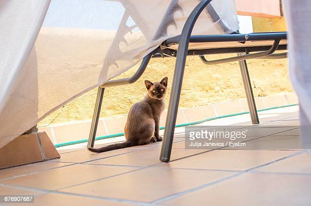 portrait of burmese cat sitting under chair at building terrace - burmese cat stock pictures, royalty-free photos & images