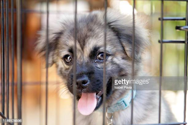 portrait of caged dog - animal shelter stock pictures, royalty-free photos & images