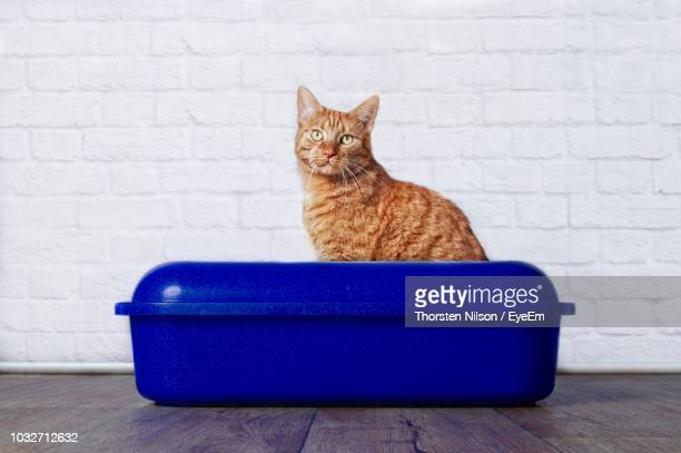 Portrait Of Cat Against Wall In Blue Container On Table