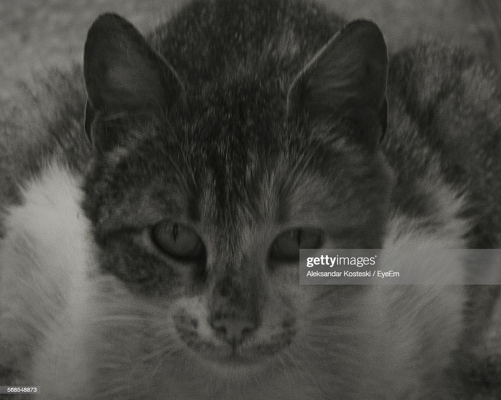 Portrait Of Cat At Home : Stock Photo