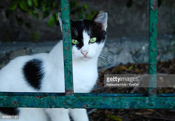Portrait Of Cat Behind Fence