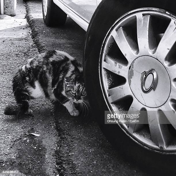 Portrait Of Cat By Car On Street
