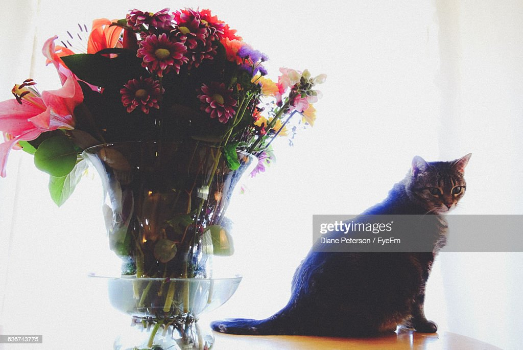 Portrait Of Cat By Flower Vase On Table At Home Stock Photo Getty