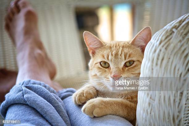 portrait of cat by human legs at home - human leg stock photos and pictures