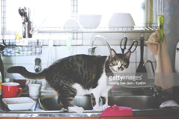 Portrait Of Cat By Kitchen Sink At Home
