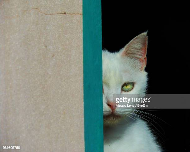 Portrait Of Cat By Wall