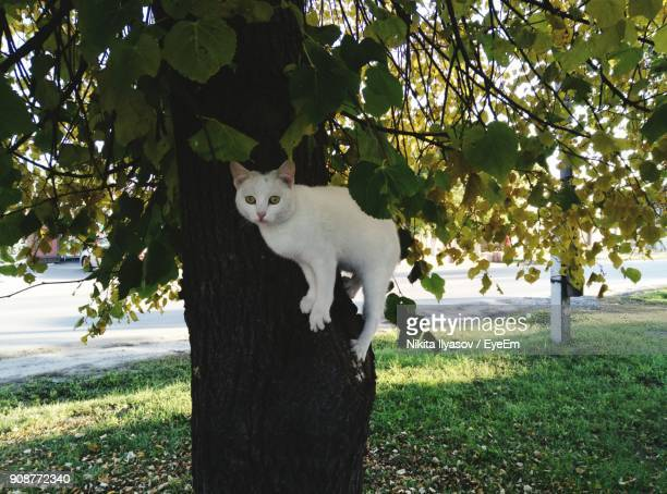 Portrait Of Cat Climbing On Tree